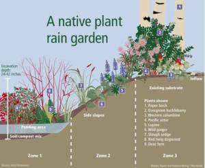 Rain Garden 101 lecture