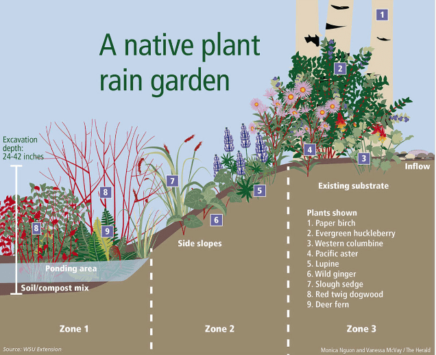 Rain Gardens 101: How To, January 23 – Friends of the Oak ... on green wall plants, rain glass frog, phytoremediation plants, chemical waste plants, rain landscape, green roof plants, organic insecticides plants, fountain plants, water plants, rain coffee, rain art drawings, native plants, gardening plants, rain showers umbrella clip art, rain lily plant, small outdoor plants, summer flowering plants, bioretention plants, miniature dwarf or plants, rain on crops,